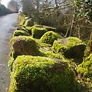 Moss On The Wall by lezvee