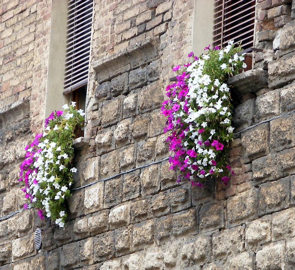 Window Boxes In San Gimignano by Fara