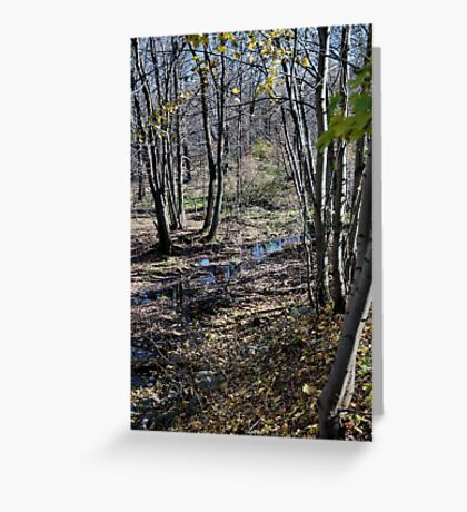 Stream in the Woods Greeting Card