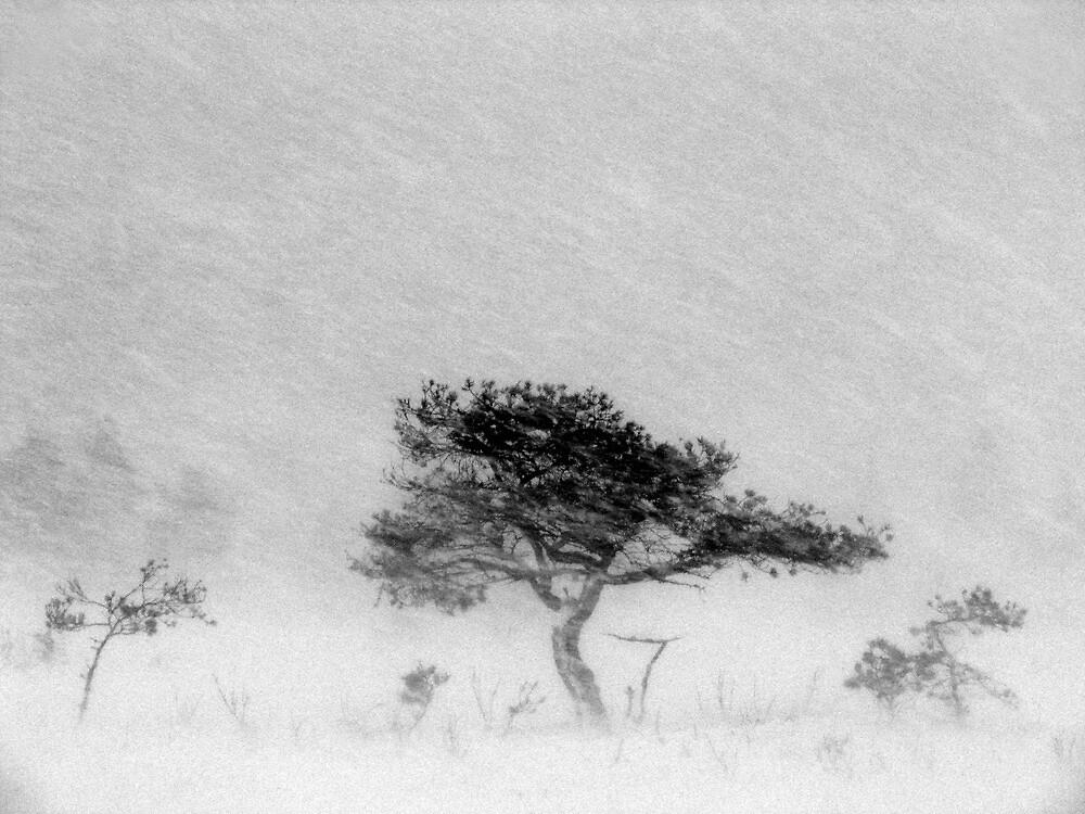 9.12.2011: Alone in the Blizzard II by Petri Volanen
