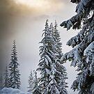 New Snow by Inge Johnsson