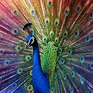 peacock (violet) by hannes cmarits