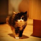 scaredy cat by Ben Luck