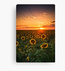 Light Of The Plains Canvas Print