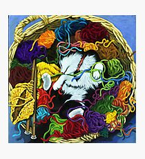 Knitter's Helper - cat oil painting Photographic Print