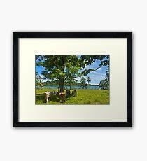 Cows. Framed Print