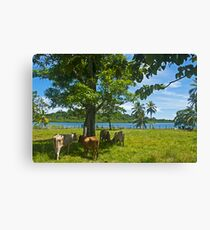 Cows. Canvas Print