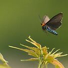 Hot moth wearing sunglasses by Alinka