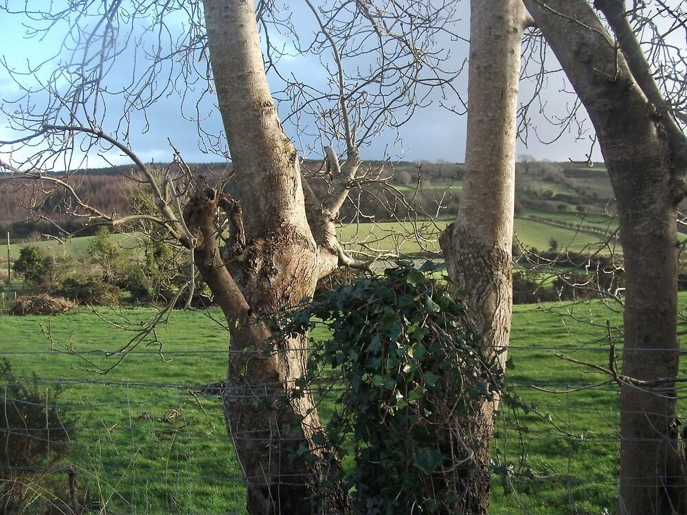 Trees ,Ballycastle,Northern ireland by Deborah42