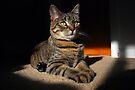 My Little Sphinx by jodi payne