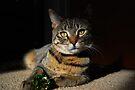 Green & Gold by jodi payne