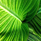 Lines in Green by Marguerite Foxon
