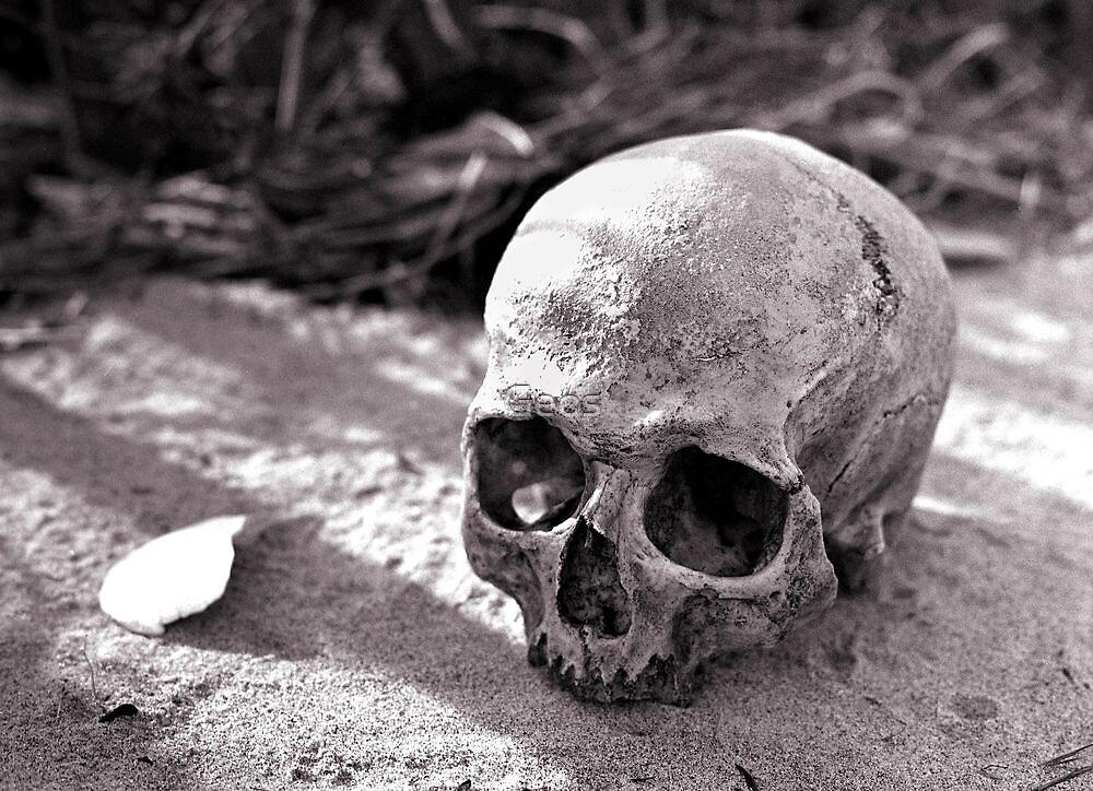 Skull by Geos