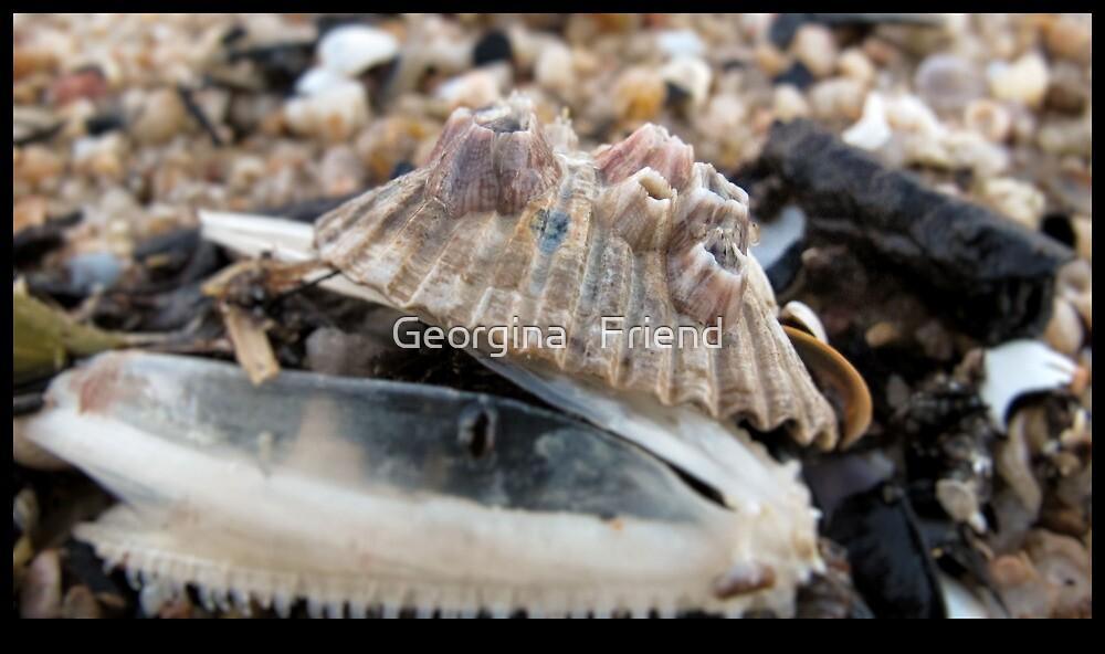 Macro Study: Cockle Shell III by Georgina   Friend