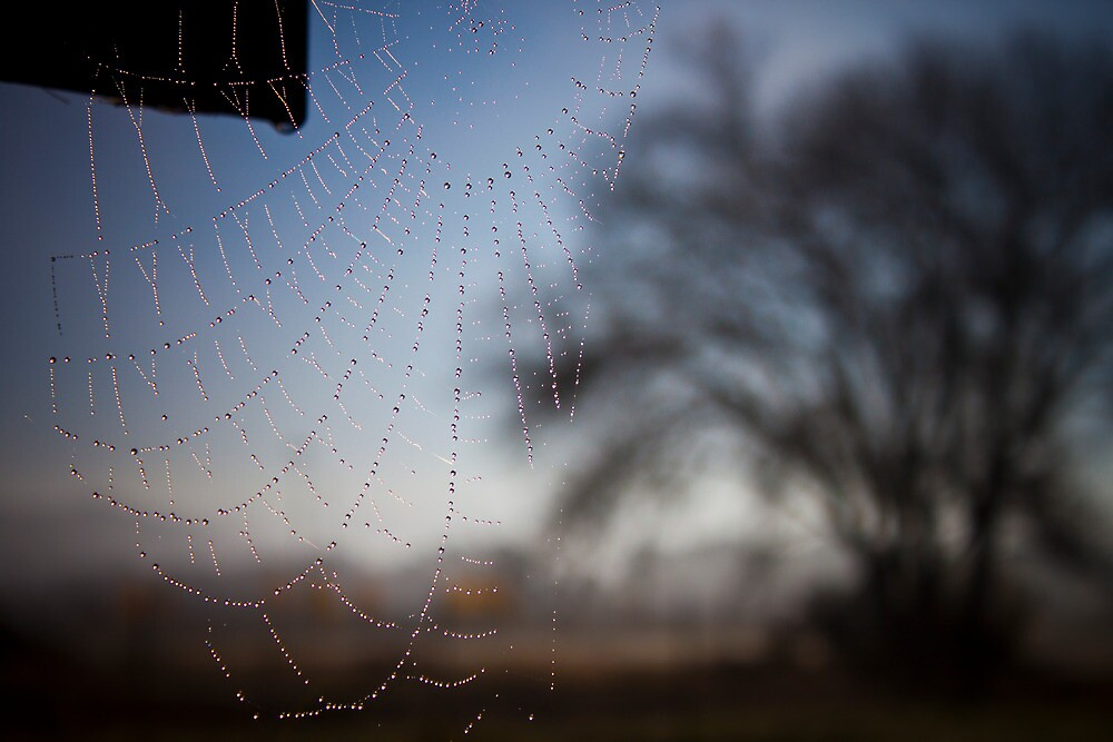 web and dew by gerardofm4