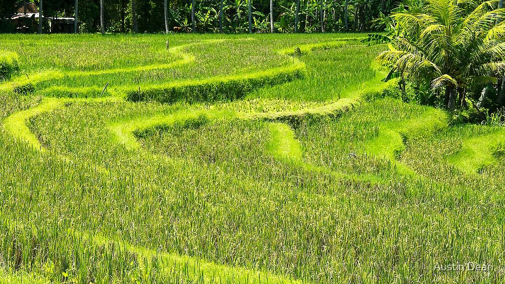 Bali Rice Paddy by Austin Dean