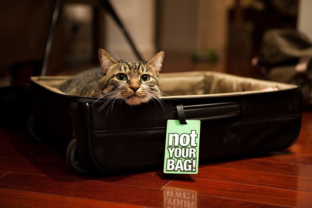 Not My Bag by WoAi