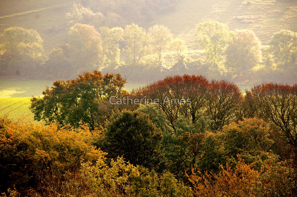 Golden autumn light on the South Downs, England by Catherine Ames