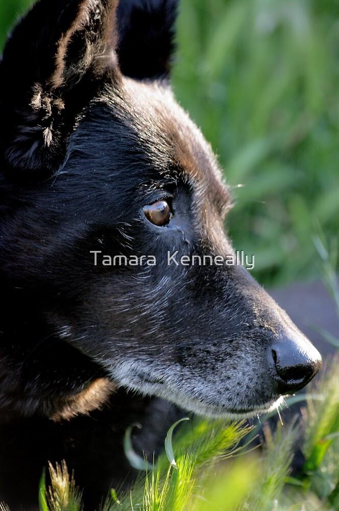 Jasper by Tamara  Kenneally