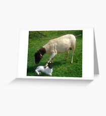 Dorper mother comforting her snow white newly born lamb, Kameeldrift, Pretoria Greeting Card
