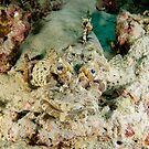 Crocodilefish - Cymbacephalus beauforti by Andrew Trevor-Jones