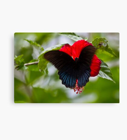 Bali Butterfly Canvas Print