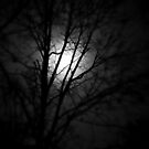 Moon light silhouette by DHParsons