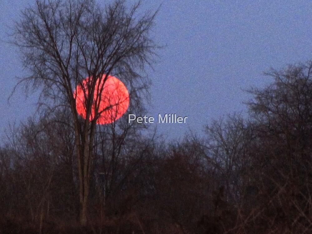 Lunar Eclipse by Pete Miller