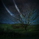 Tree@Night by smilyjay