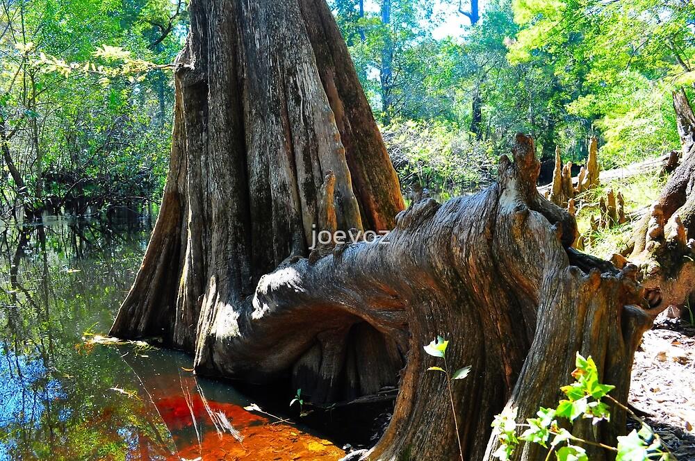 Cypress Tree by joevoz