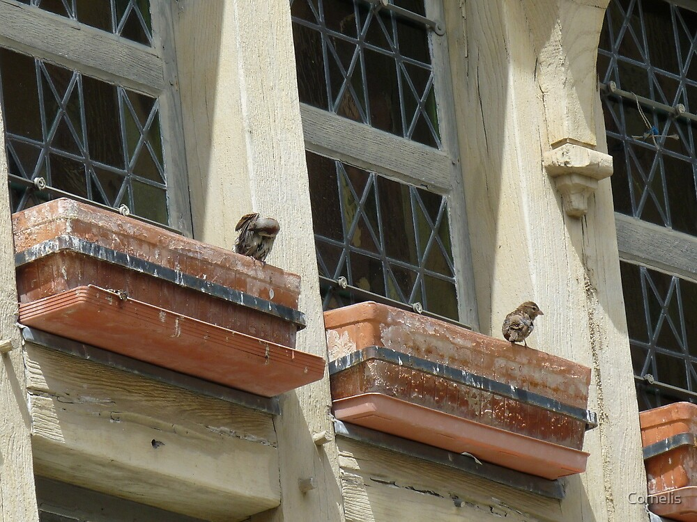 Bird watch  by Cornelis