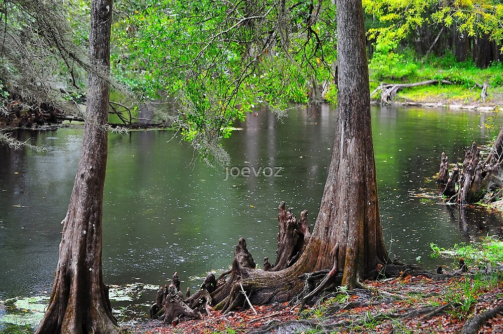 Cypress Swamp by joevoz
