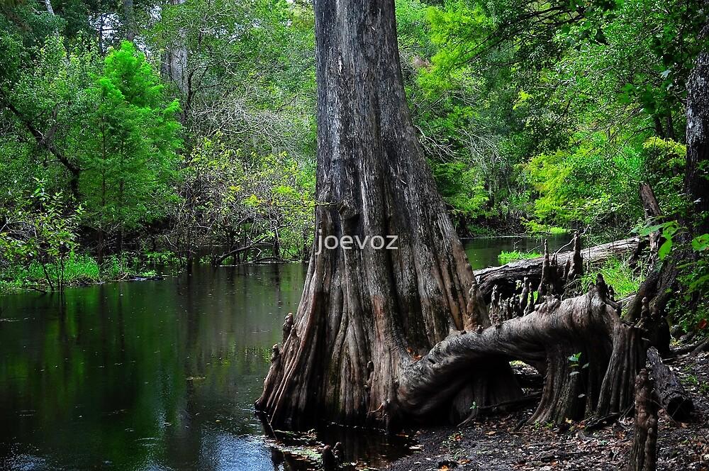Cypress Tree Scene  by joevoz