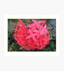 Nature's Bouquet! Art Print