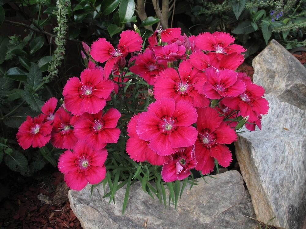Flower's by Steve  Meader