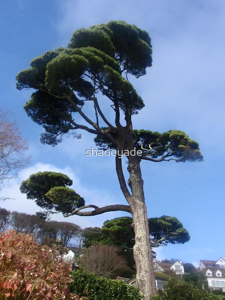 Salcombe Tree by shadeyade
