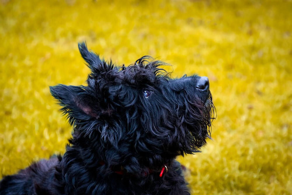 My name is not Scottie, it's Bonnie by Garry Copeland
