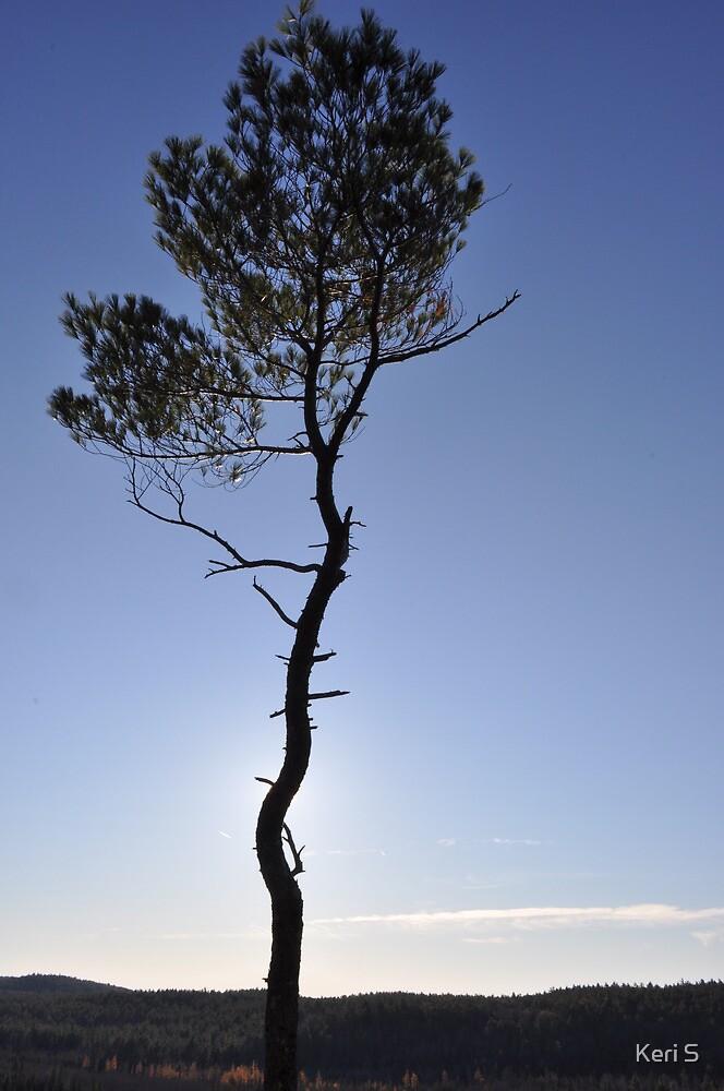 Eagle's Nest Point by Keri S