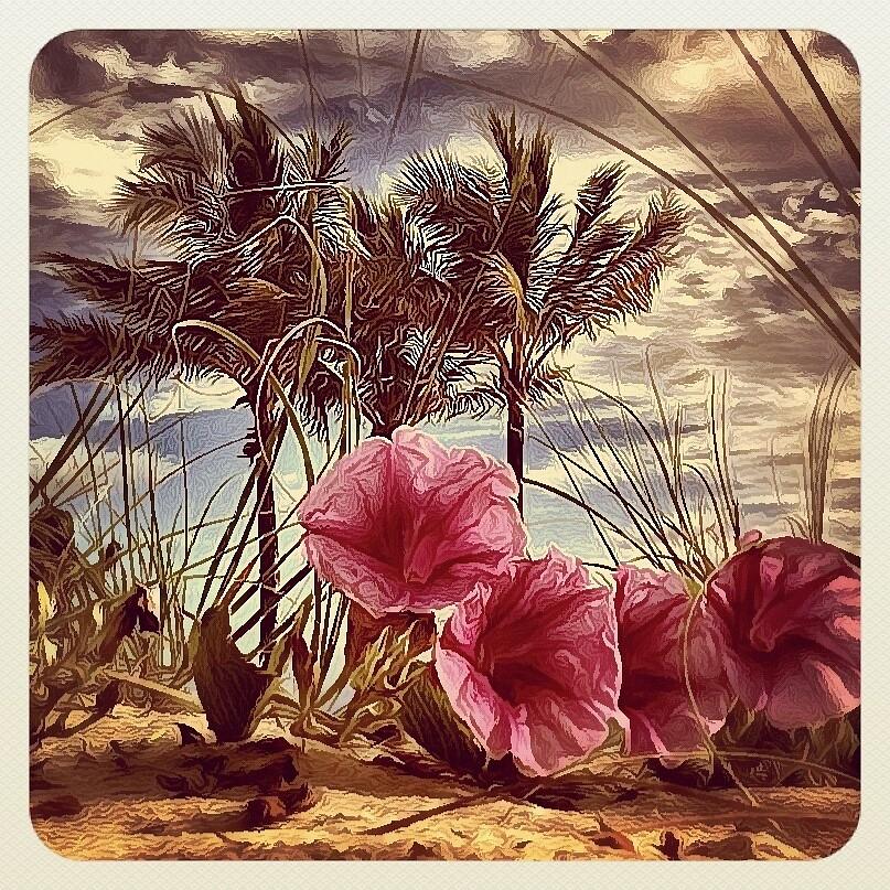 Tropicalia by Tropical Sun