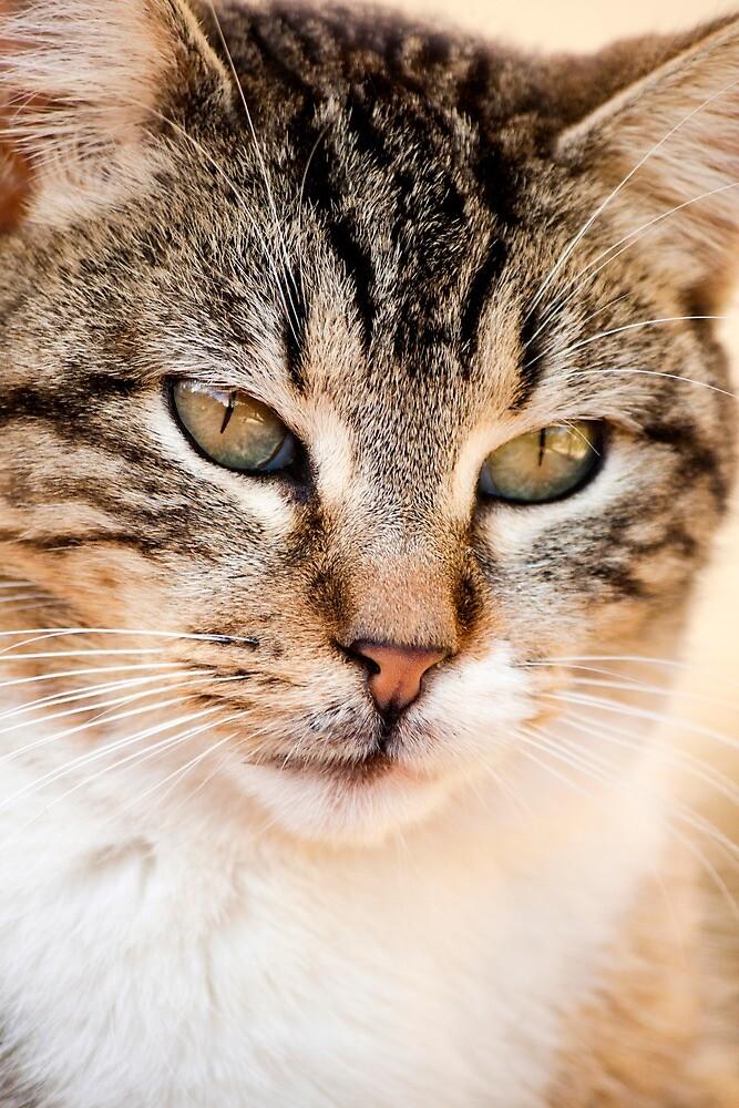domestic feline by Mauro Rodrigues