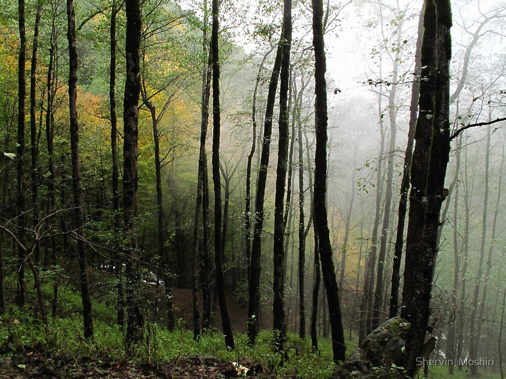 Fog in the Forest by Shervin  Moshiri