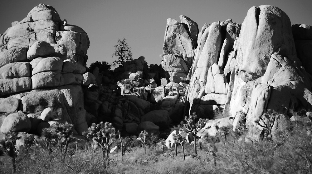 Life & Death In Joshua Tree National Park by Ronald Hannah