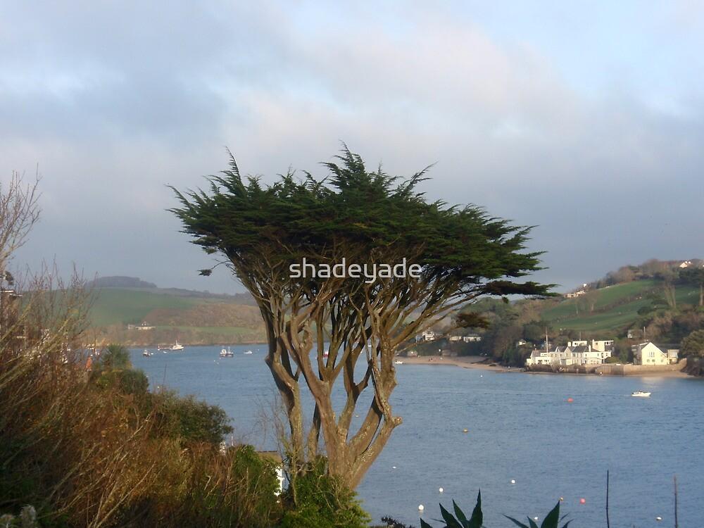 Salcombe Tree 2 by shadeyade