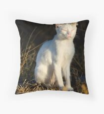 beautiful domestic cat Throw Pillow