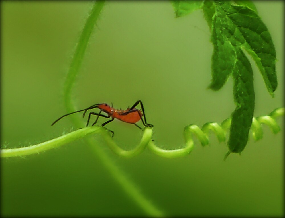 Crossing the vine by saripin