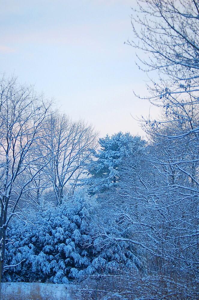 winter scene by Veronica Timpanelli