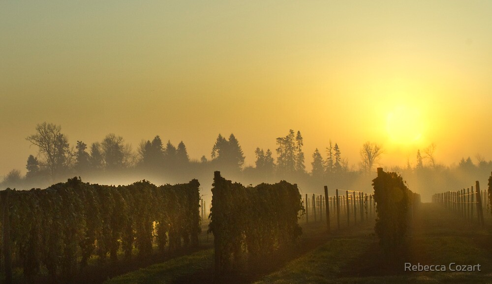 Sunset On The Vines by Rebecca Cozart