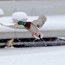 Icy landing by Steve Biederman