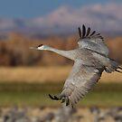 Flight Over The Fields by kurtbowmanphoto