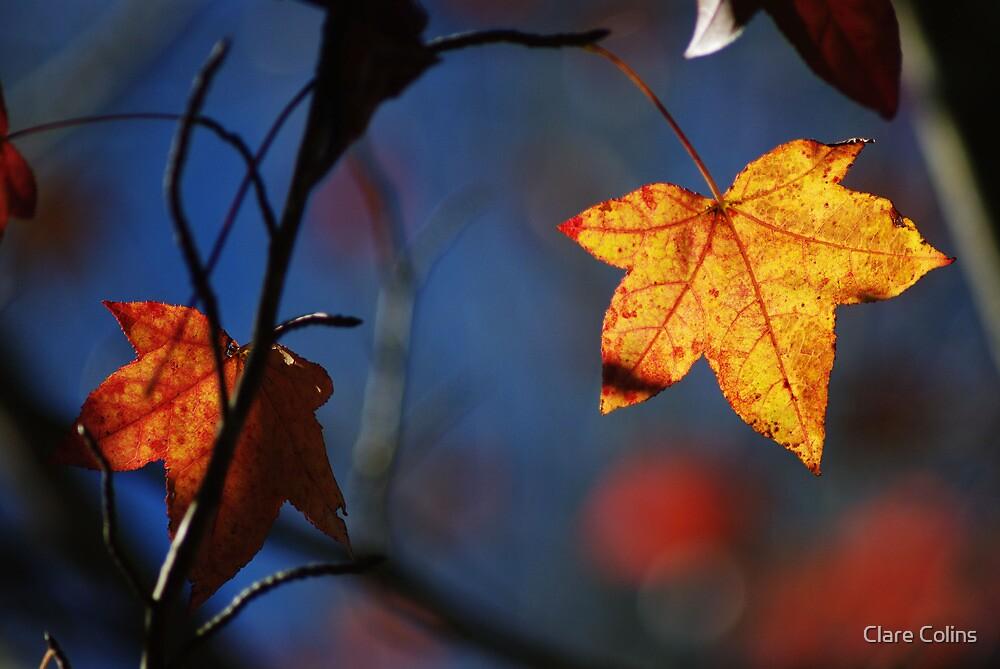golden leaf by colinsart